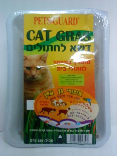 דשא לחתולים