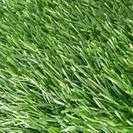 דשא ארבע גוונים 25 ממ