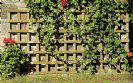 רשת עץ לצמחים מטפסים