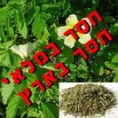 דמיאנה (גם תחליף טבק) | עלים | 100 גרם | Turnera diffusa | Damiana