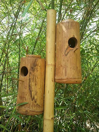 תאי הטלה לציפורים