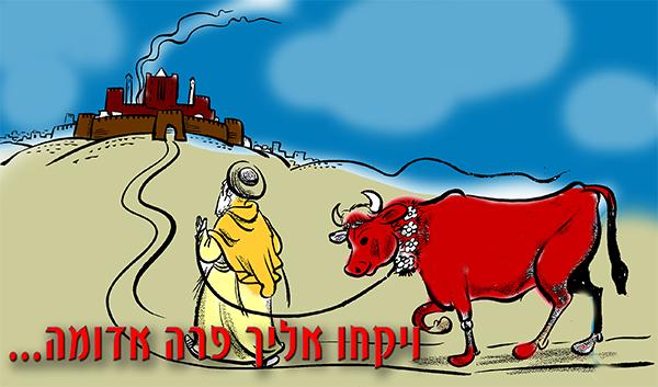 פרשת פרה אדומה