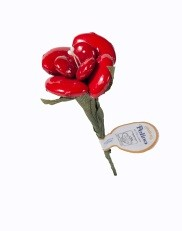 פרח דרז'ה