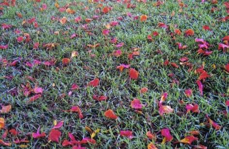 עלים אדומים על הדשא - דפנה דגן - צלמת