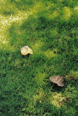 2 עלים בדשא - דפנה דגן - צלמת