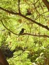 הציפור הכחולה - דפנה דגן - צלמת